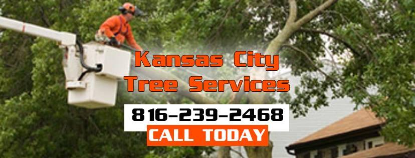 Kansas City Tree Removal Service